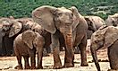 How Many Types Of Elephants Are There?