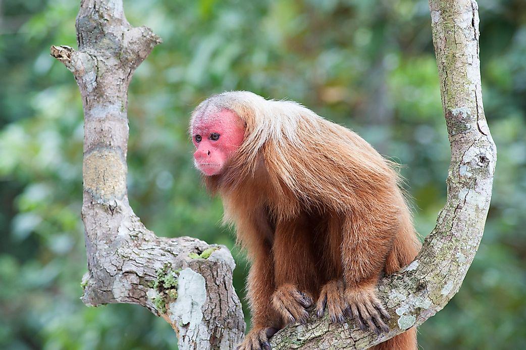 Animal Names That Start With U - WorldAtlas com