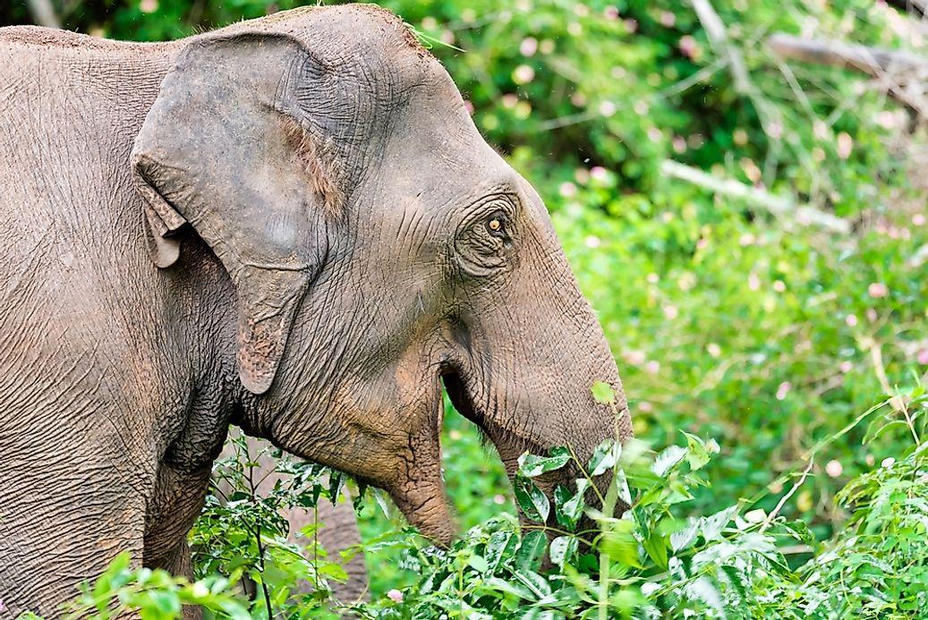 Thailand S Endangered Mammals Worldatlas Com