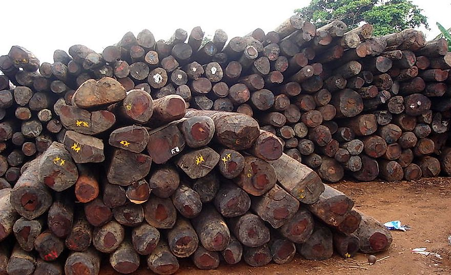 Illegally Traded Rosewood Species With The Highest Seizure