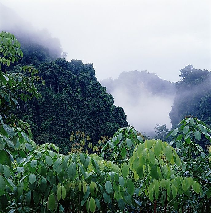 a look at popular rainforests in the world Click here for a list of facts about african rainforests all the important   compared to other rainforest through out the world the rainforests in africa are  dry they receive between  great verbal mimics they are very popular choices  for pets.