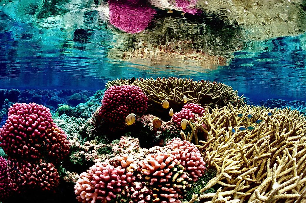 What are the meanings of 'coral' and 'coral reef'?