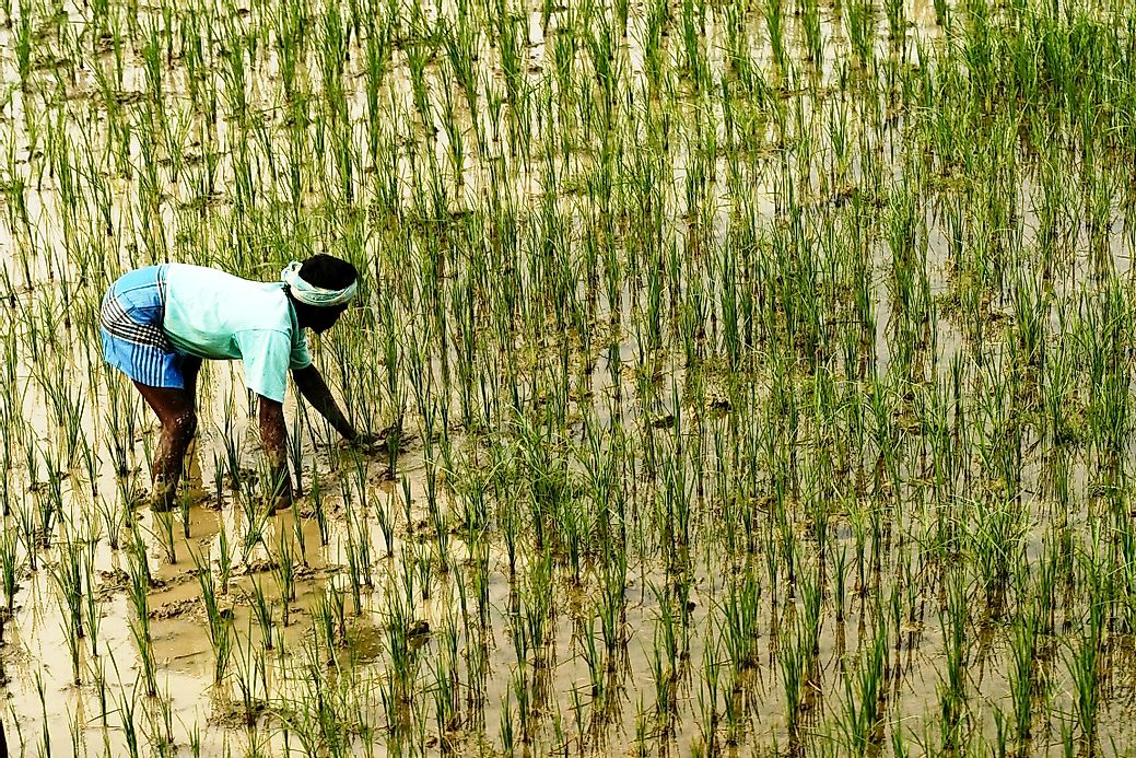 Asian country worlds third largest wheat producer