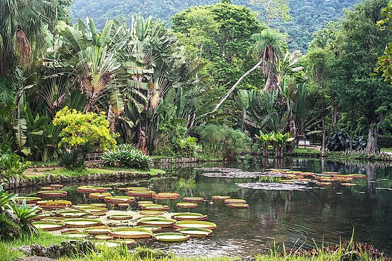Tropical Dry Forest Natural Resources