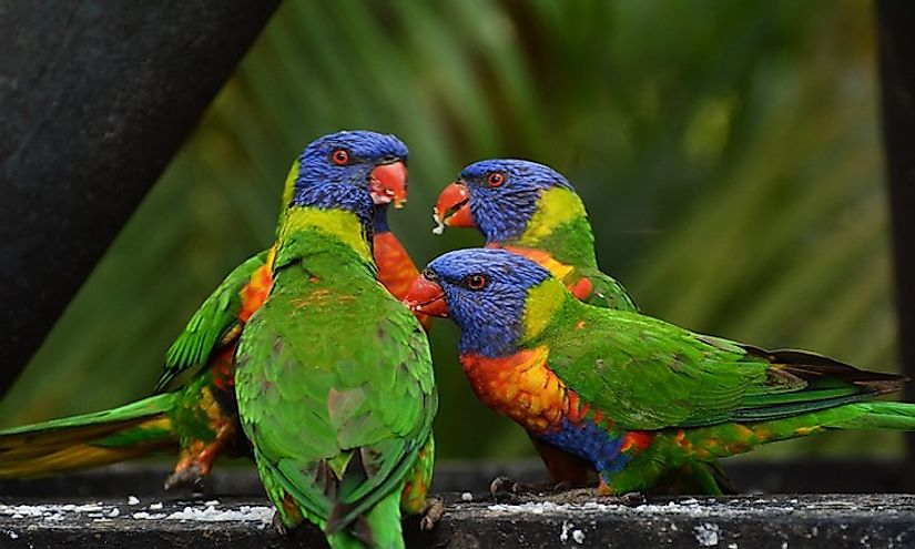 Most Colorful Birds From Around The World Worldatlas Com