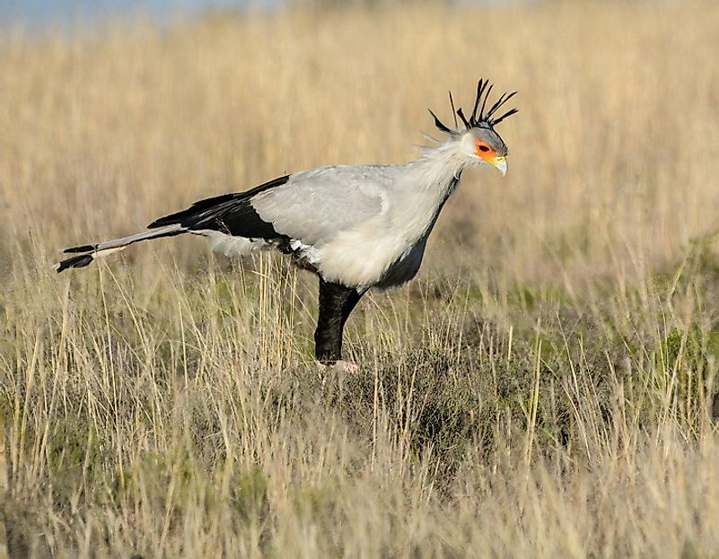 The Native Birds Of Zambia