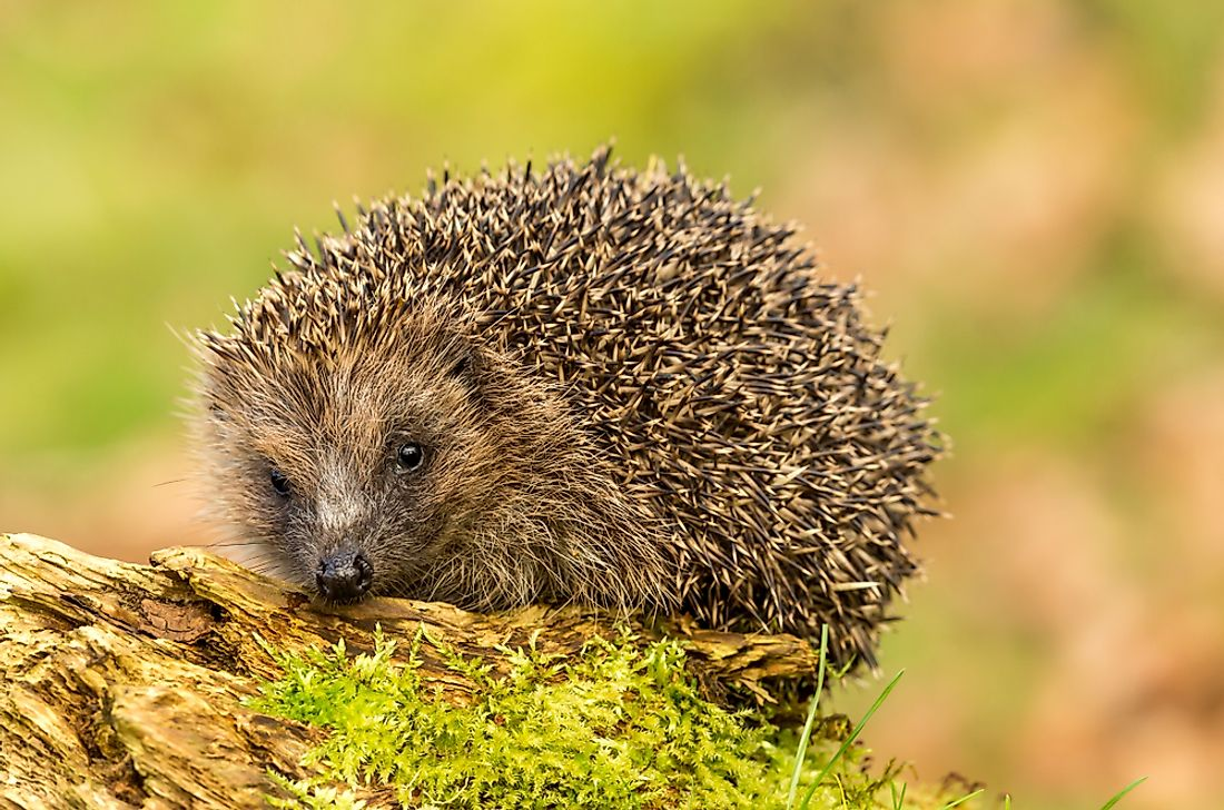 10 Animals Who Hibernate