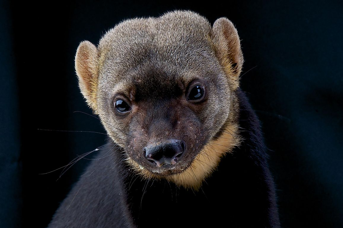 10 True Facts About The Legendary Honey Badger