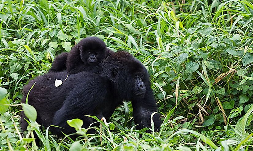 National Parks Of The Democratic Republic Of The Congo