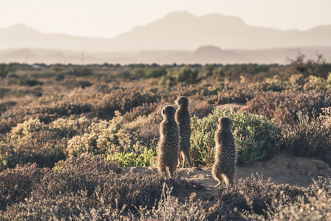 What Is The Karoo?