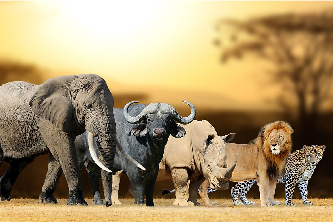 What Are The Big 5 Animals?