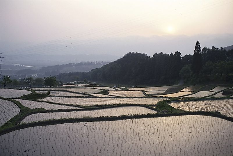 The Rice Paddy Fields Of Asia: Cultural, Economic, And Culinary Importance