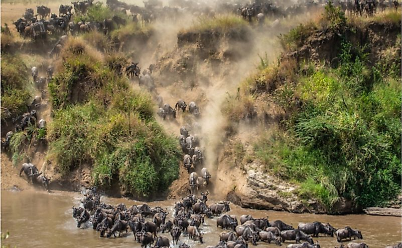 10 Interesting Facts About The Masai Mara Of Africa