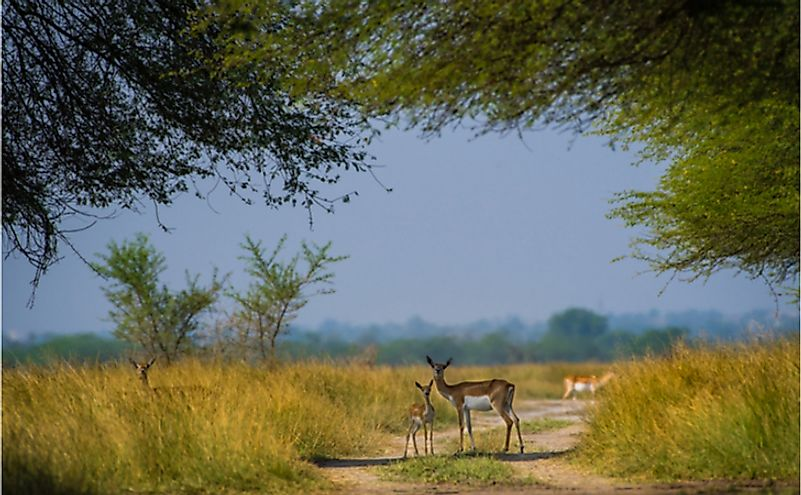 Where Does the Blackbuck Live?