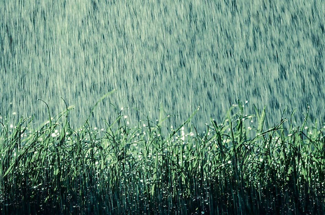 What Causes the Earthy Smell When Rain Falls?