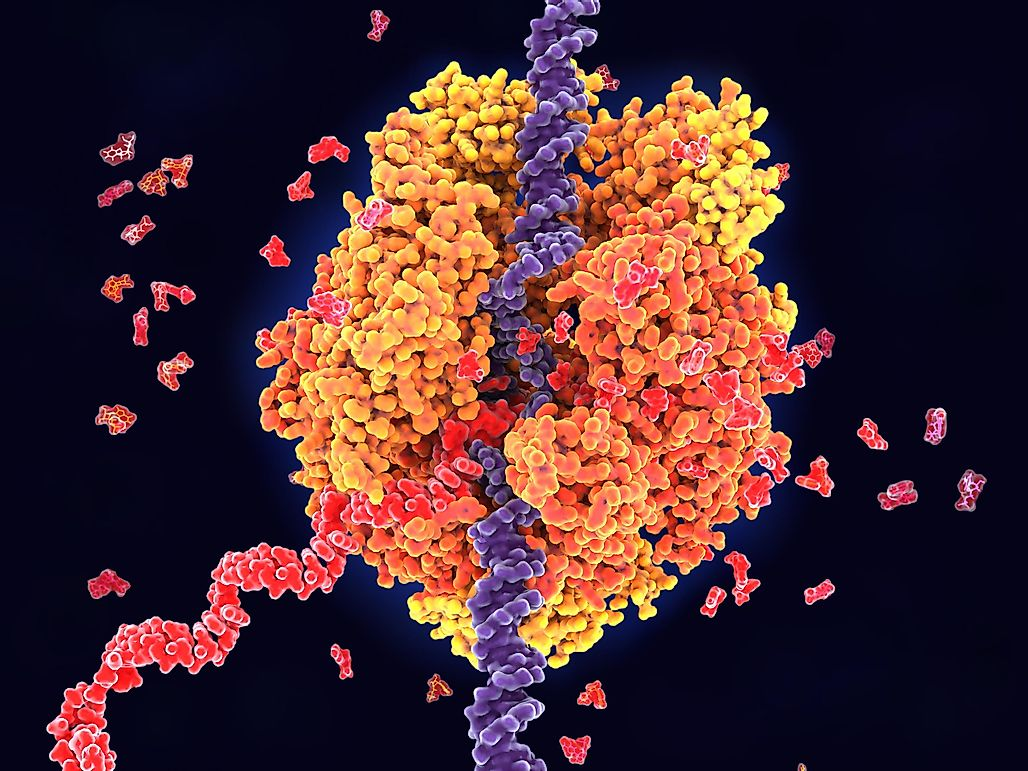 How Often Does DNA Polymerase Make A Mistake?