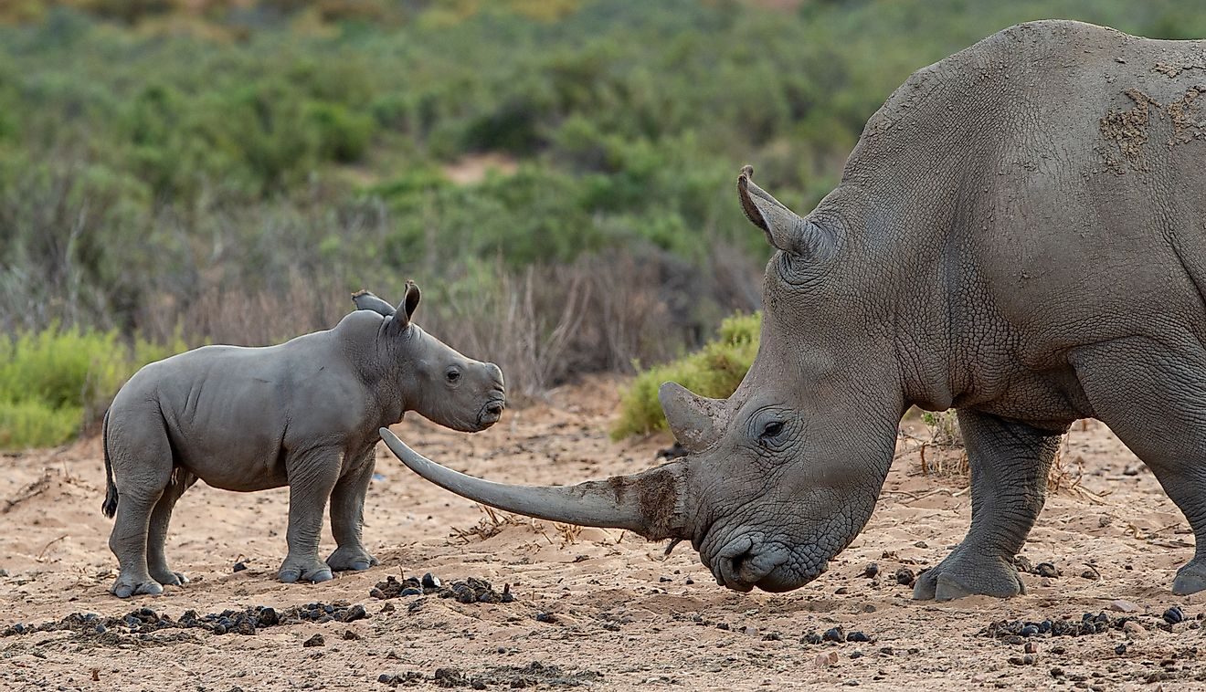 Lack Of Tourism Opens Up New Challenges In Rhino Conservation