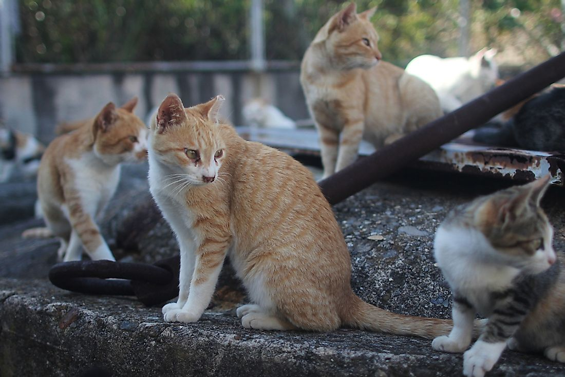 The Cat Island of Tashirojima - Unique Places Around the World