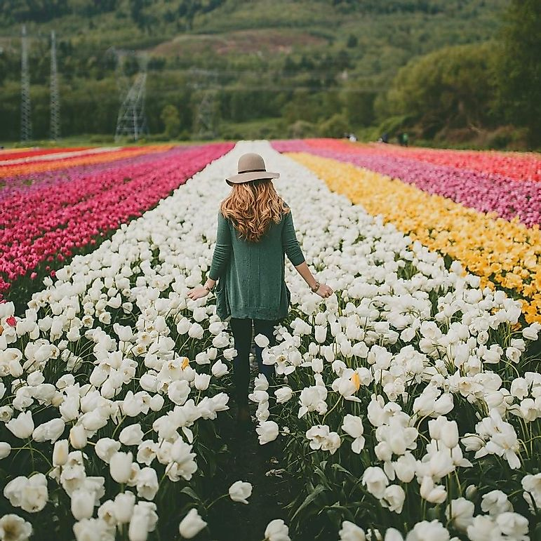 This Instagram Trend Is Killing Flower Fields Around The World