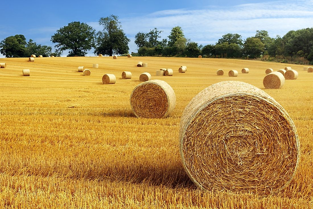 Top 10 Hay Producing US States