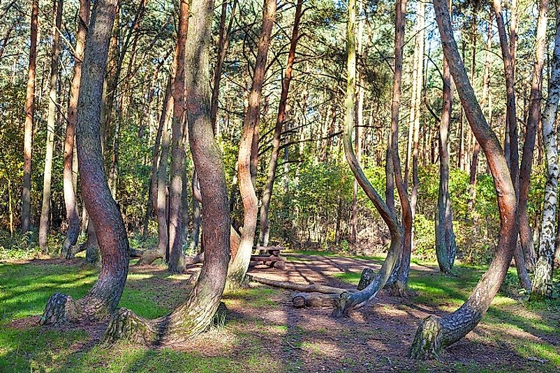 The Crooked Forest - Unique Places Of Poland