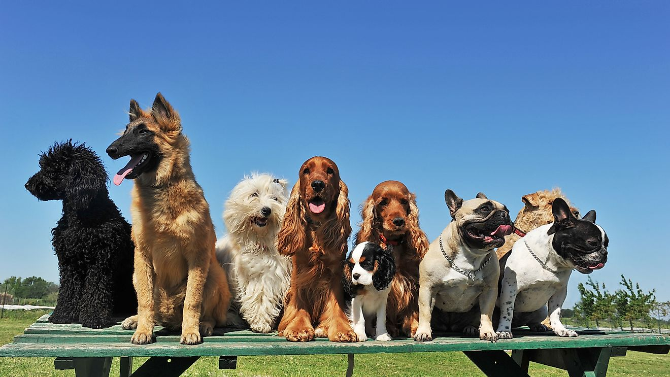 10 Countries In The European Union With The Most Dogs