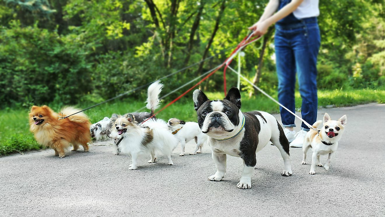How Big Is The US Dog Walking Business?