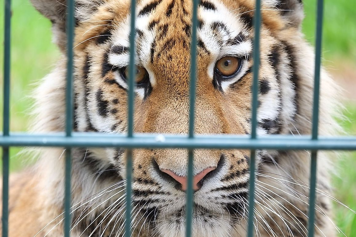 Europe's 'Second-class Tigers' Suffer A Lifetime Of Merciless Exploitation