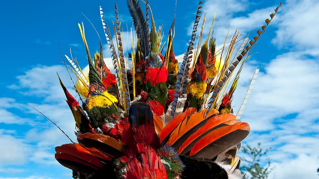 Ceremonial Headdresses Threaten Vulnerable Parrot Species