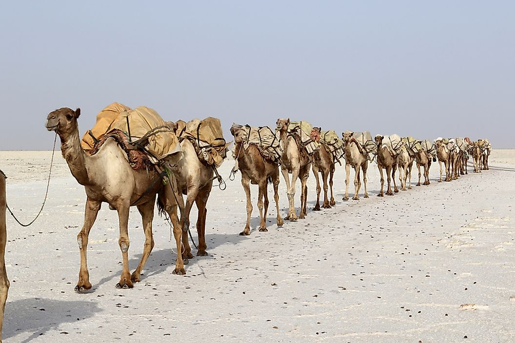 Where Is the Danakil Desert?