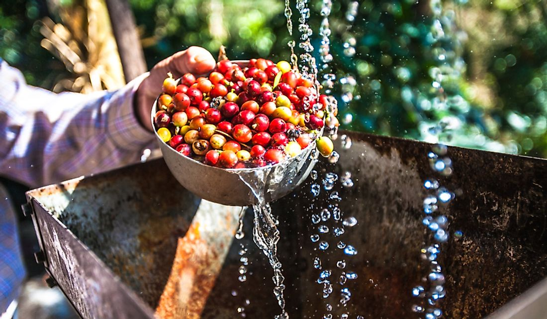 What Is Coffee Wastewater?