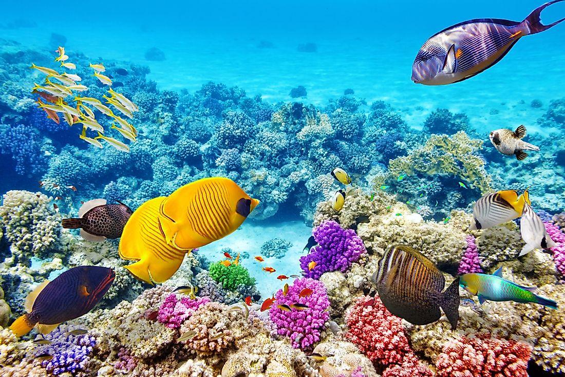 Is The Great Barrier Reef Really Dead Worldatlas Com