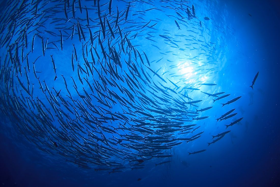 How Many Fish Live in the Ocean?