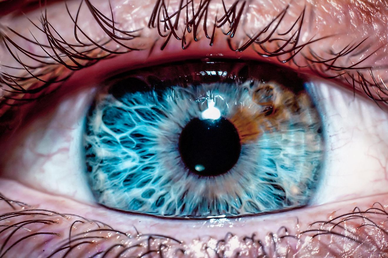 Why Do People Have Different Eye Colors?