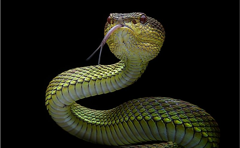 In the past, it was believed that snakes were deaf and could not hear anything.