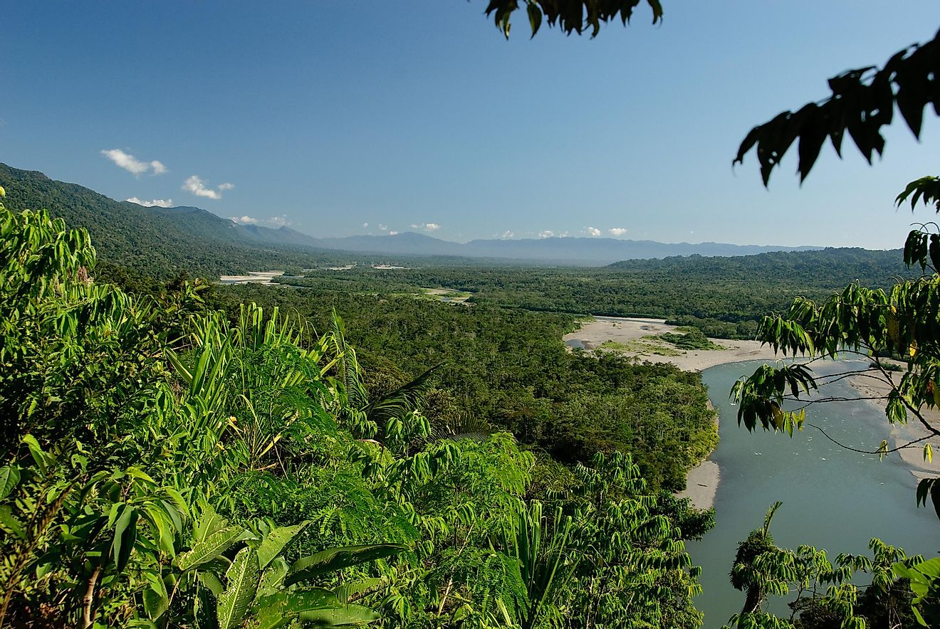 A river flowing by amidst the green landscape of Peru's Manú National Park.