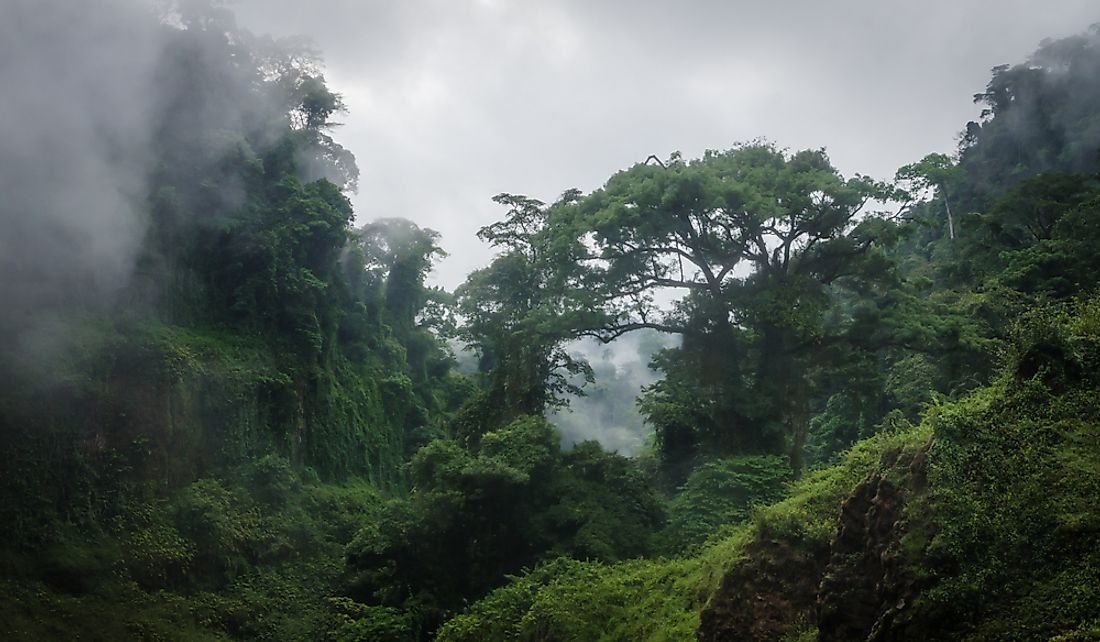 Fog over the rainforest in Cameroon.