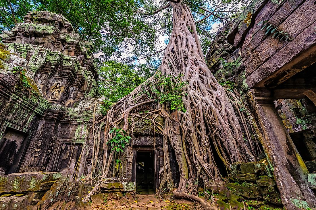 The ancient temple of Ta Prohm, Cambodia.