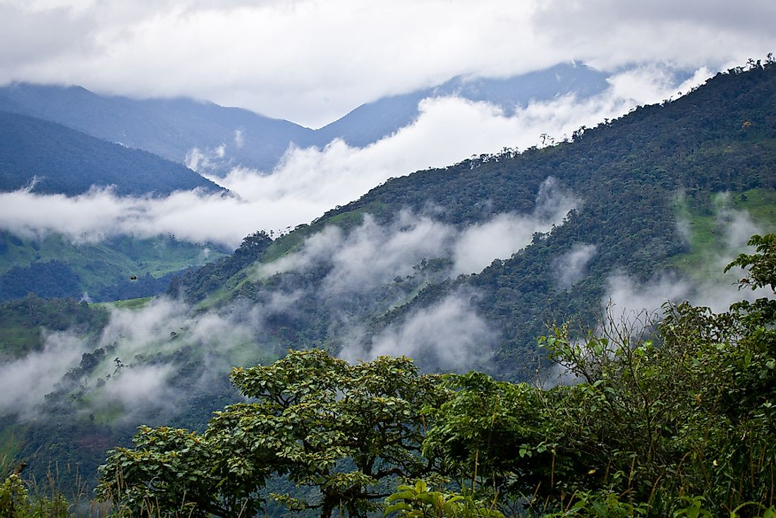 A cloud forest is characterized by a subtropical or tropical climate with a high level of mist.
