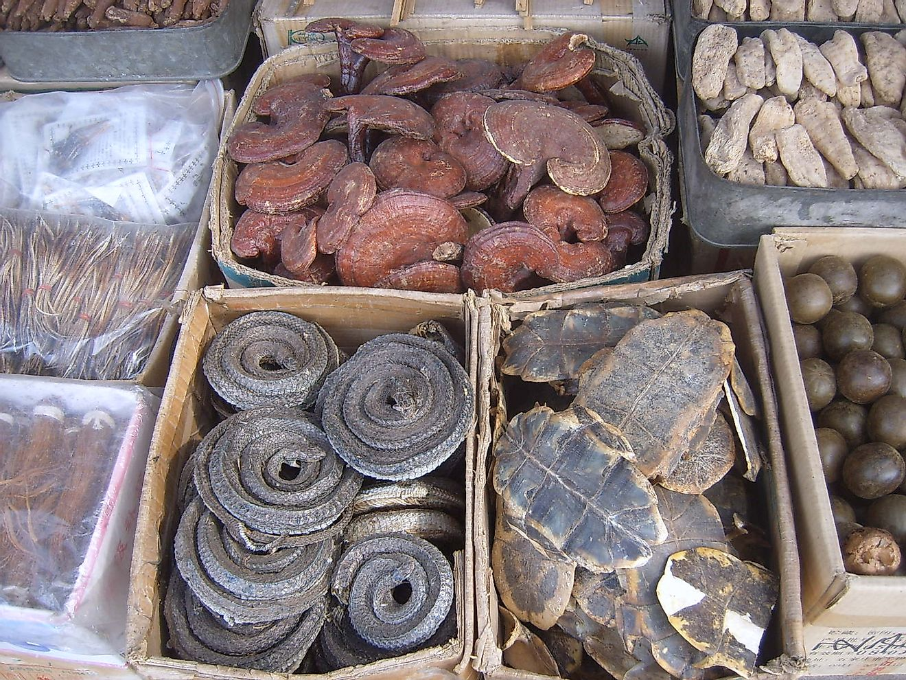 "Assorted dried plant and animal parts used in traditional Chinese medicines, clockwise from top left corner: dried Lingzhi (lit. ""spirit mushrooms""), ginseng, Luo Han Guo, turtle shell underbelly (plastron), and dried curled snakes. Image credit: User:Vbe"