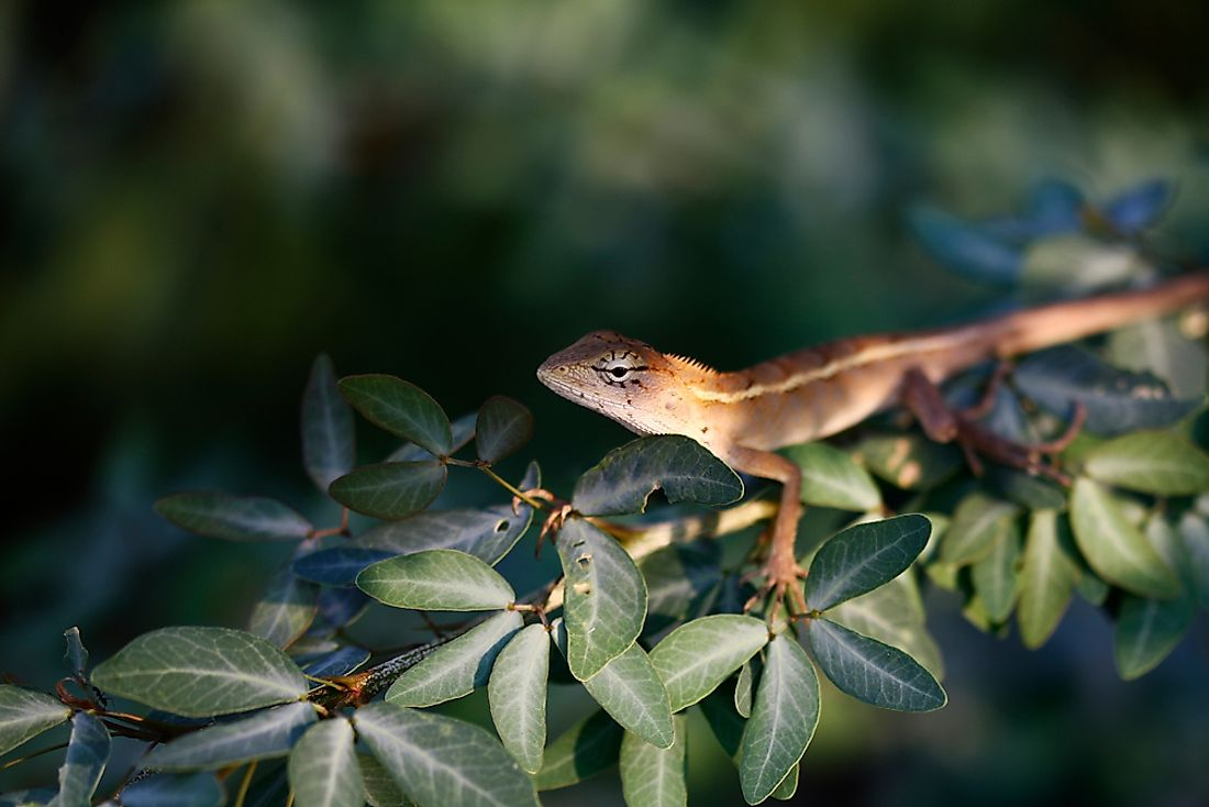 Most lizards are cold-blooded and rely on the sun for warmth.