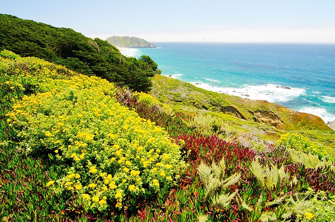 The California Floristic Province is home to over 2,000 endemic plant species.