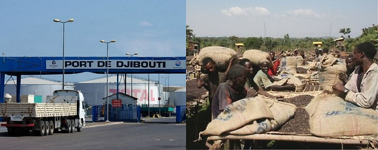 Coffee beans are a vital component of Djibouti's export sector.