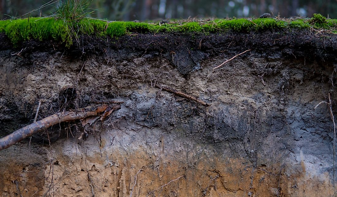 A close up podzol soil.