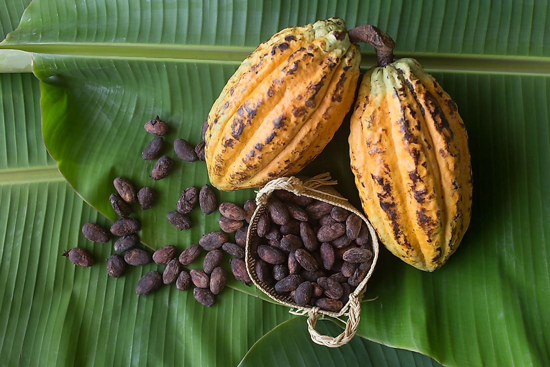 Cocoa beans cultivated in Grenada.