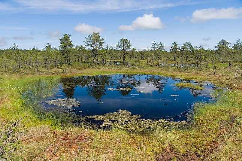 Sparsely wooded muskeg bog and marshland area in Estonia.