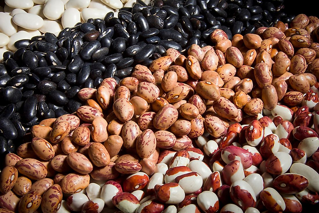 A collection of different varieties of dry beans.