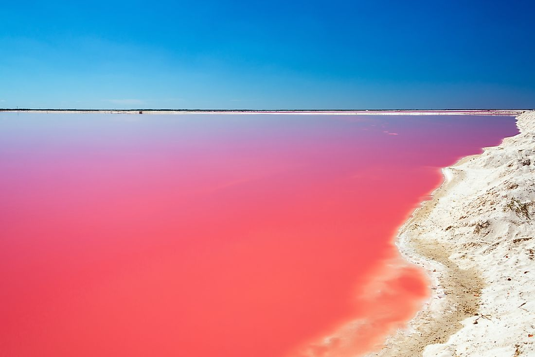 The pink color of Las Coloradas is caused by tiny marine microorganisms.
