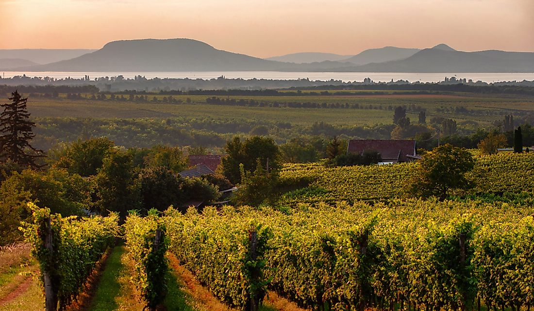 Vineyards near Lake Balaton in Hungary.
