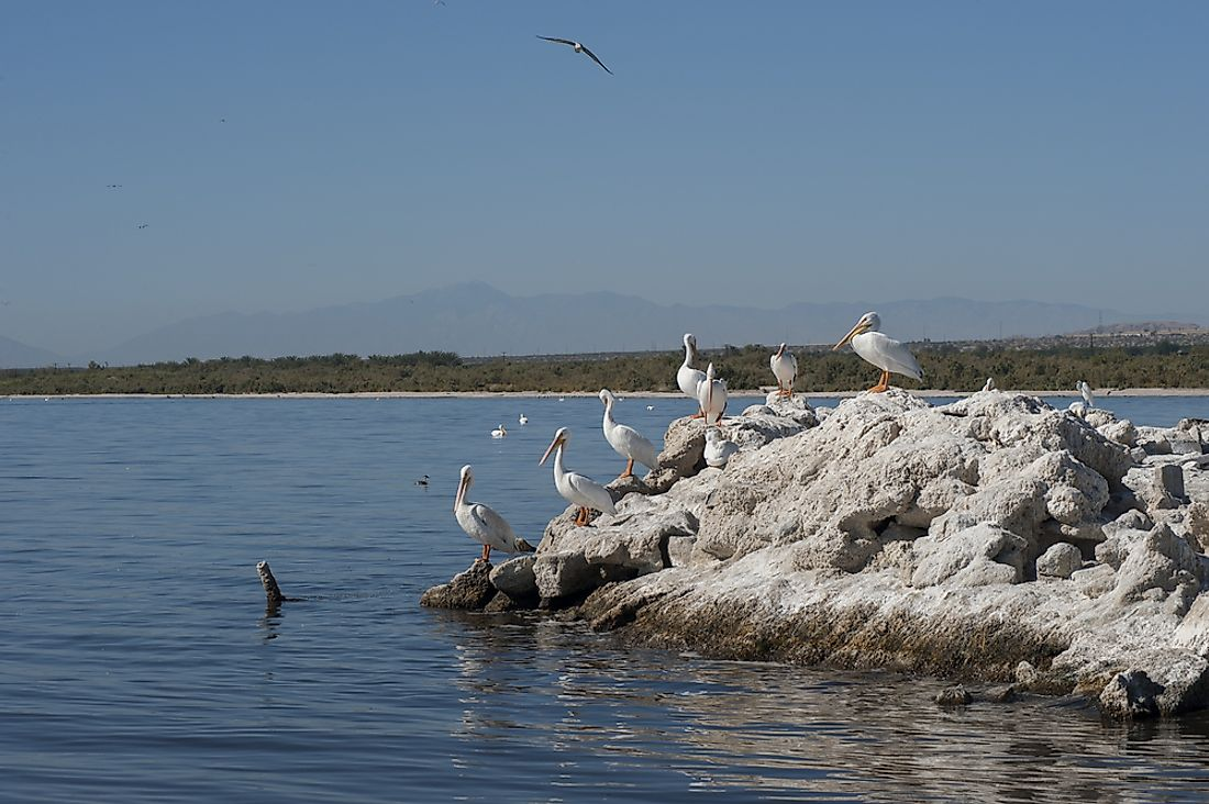 California's Salton Sea has been identified as an Important Bird and Biodiversity Area within the United States.